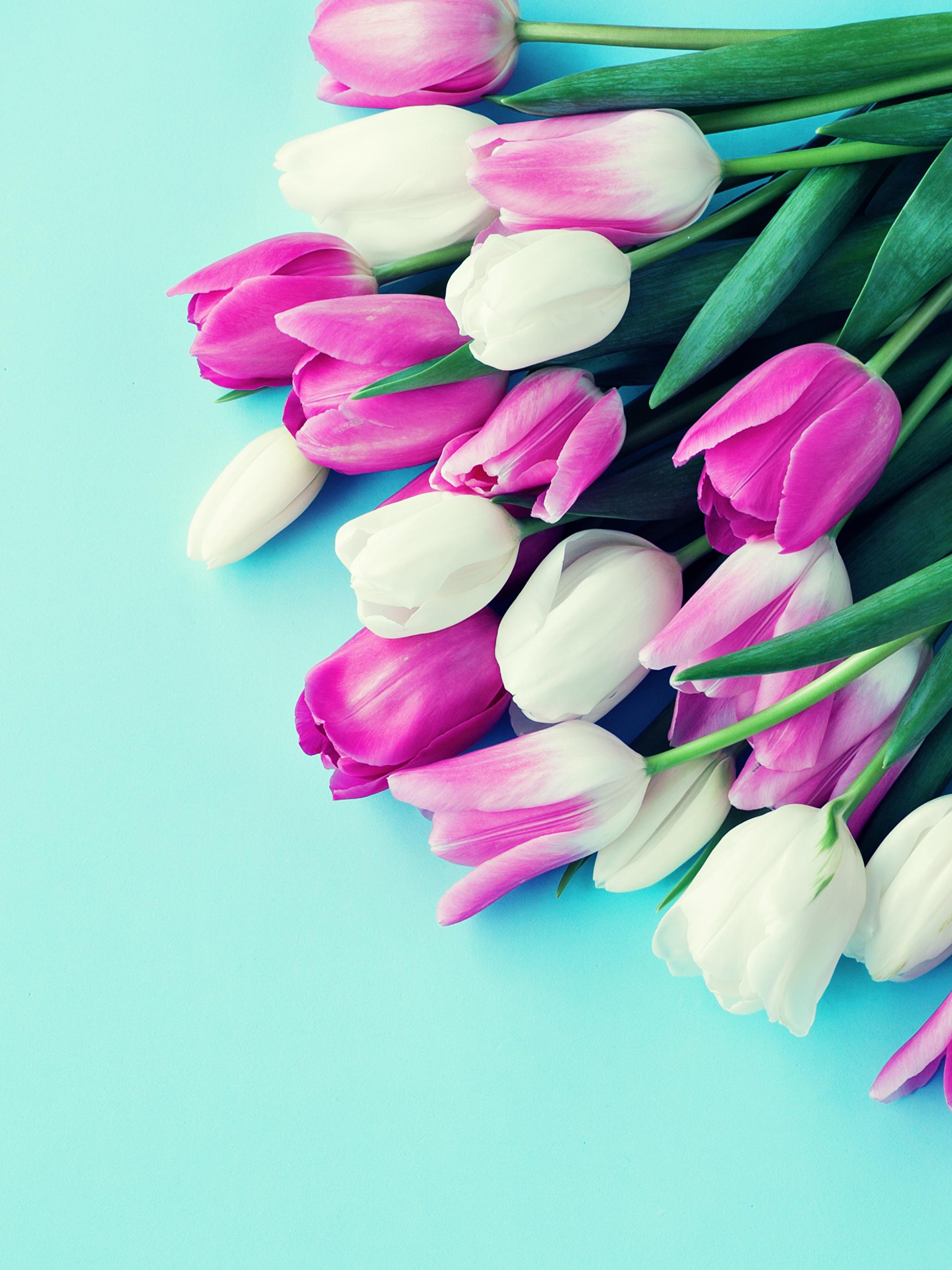Картинки тюльпанов на заставку телефона