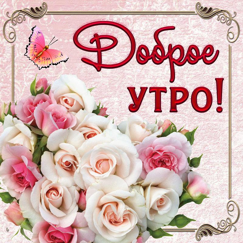 прошло картинки с розами пожеланием доброго утра камера