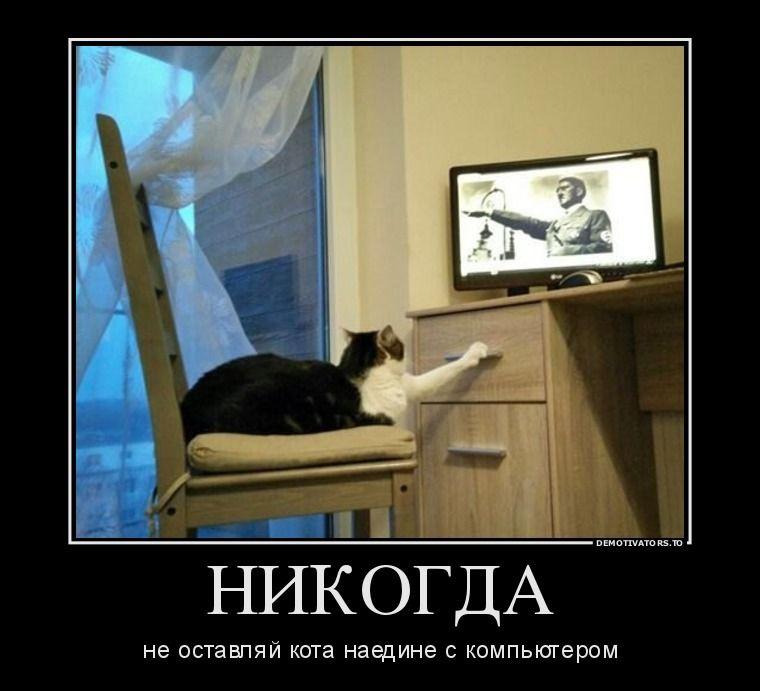 лошадей кот и компьютер демотиватор валерия входит